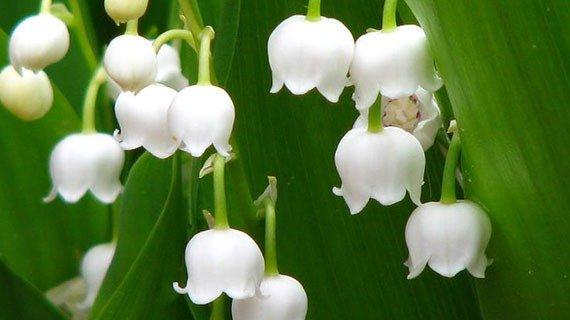 لیست برخی از گلهای رایج در ایران برای سنسور گل و گیاه