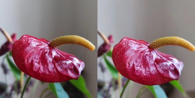 مقایسه عکس های گرفته شده گوشی شیائومی Mi 10 Ultra و Mi 11 [بزرگ نمایی 5 برابری]